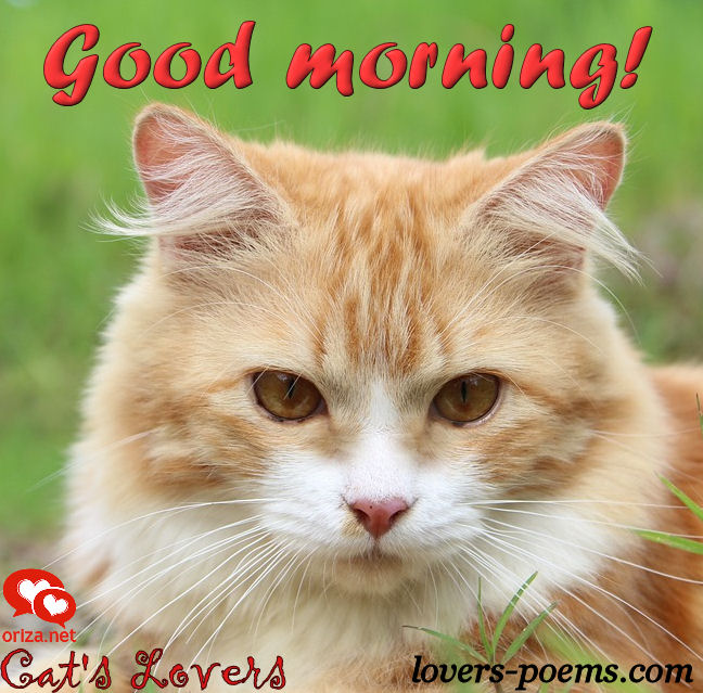 cats-lovers-good-morning-001
