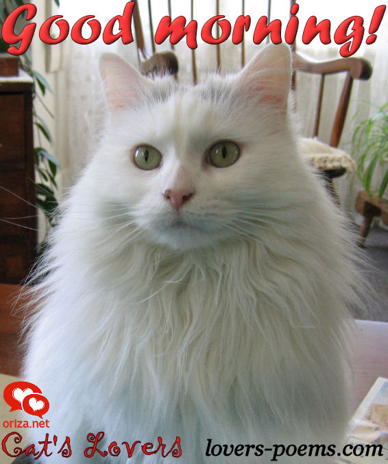 cats-lovers-good-morning-003