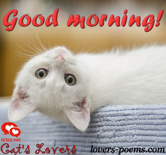 cats-lovers-good-morning-002