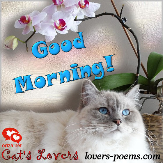 cats-lovers-good-morning-004